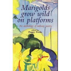 Marigolds grow wild on platforms
